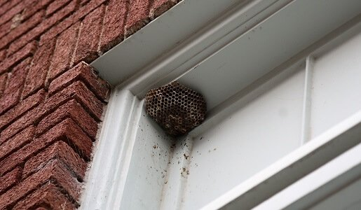 Bee and Wasp Control in Sydney