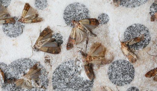 moth-infestation-control