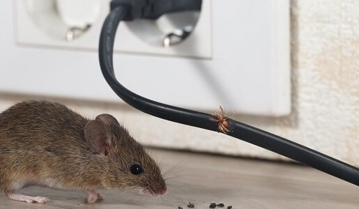 Mouse and Rat Control in Geelong