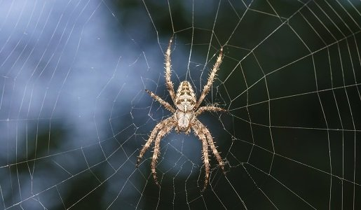 Spider Pest Control in Tasmania